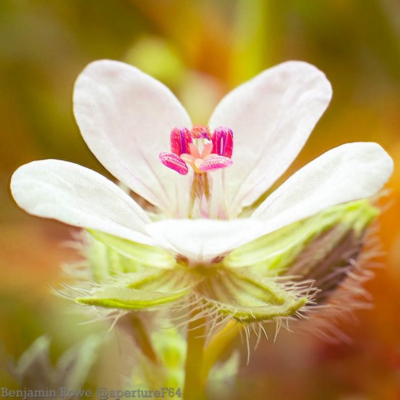 Wild Flower Macro-Edit4