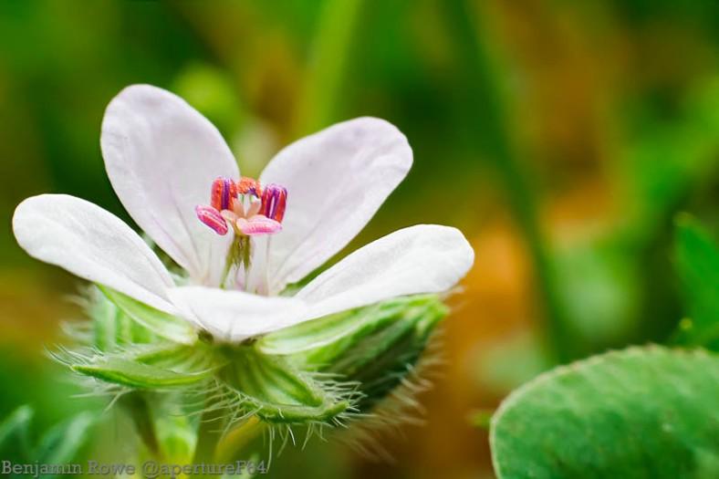 Wild Flower Macro