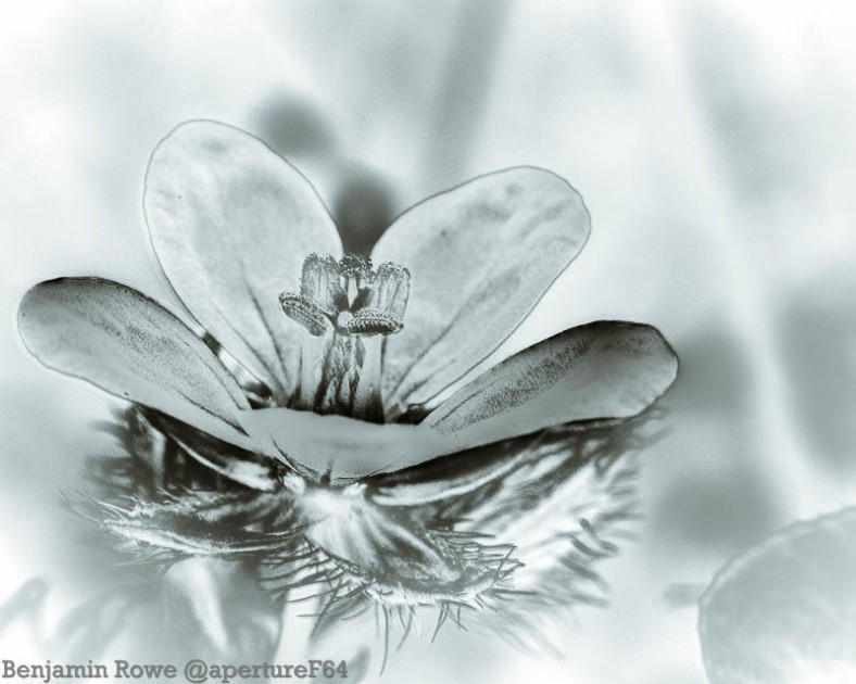 Wild Flower MacroEnfused