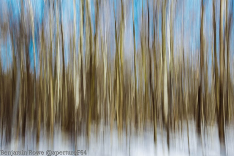 abstract woods 1