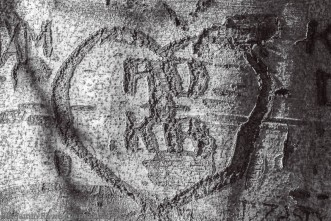 Love Carved in Tree-1