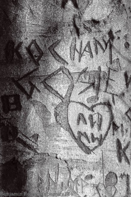 Love Carved in Tree-6