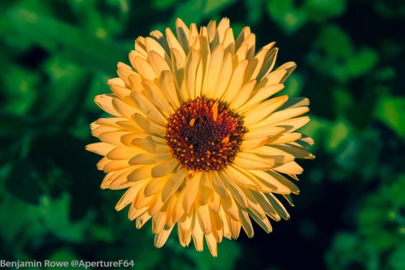 Yellow Flower Crossed