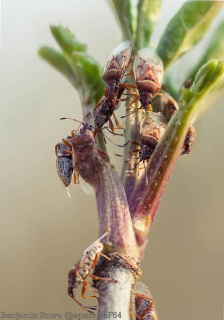 Bugs swaming on fresh leaves