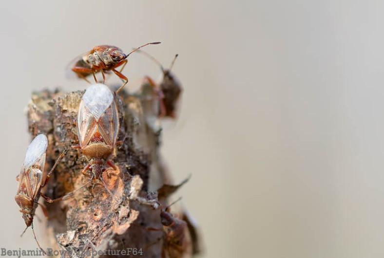 Firebugs crawling on tree