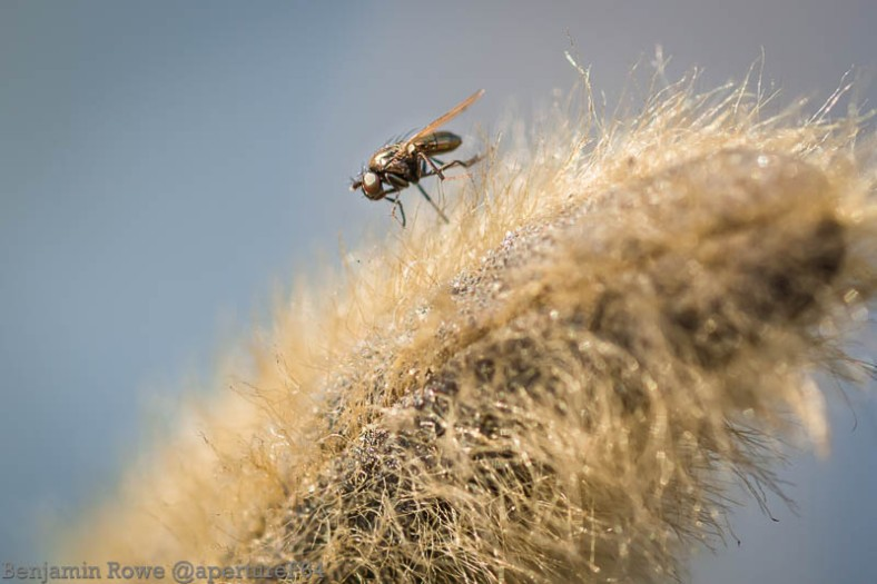 Fly cleaning