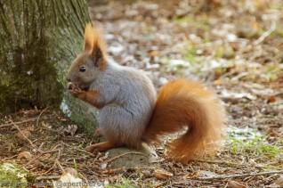 Squirrel Lick