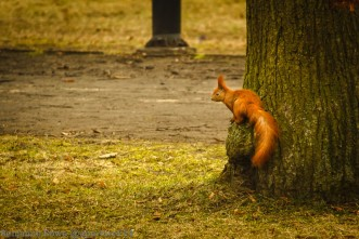 Squirrel Look Out