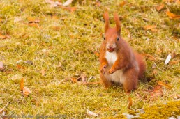 Squirrel Mouthful