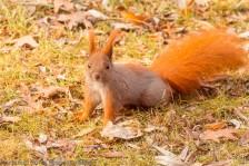 Squirrel Pose