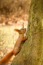 Squirrel Run or Hide