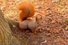 Squirrel Where are my Nuts