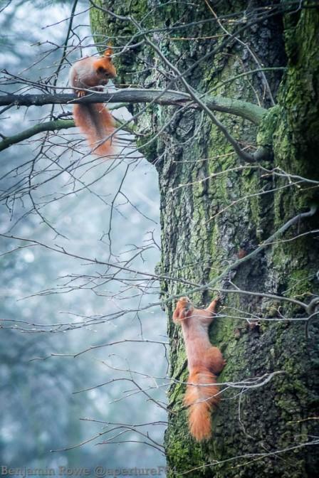Squirrels at play 2