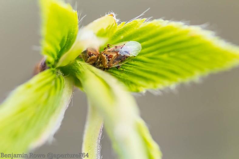As Snug As A Bug