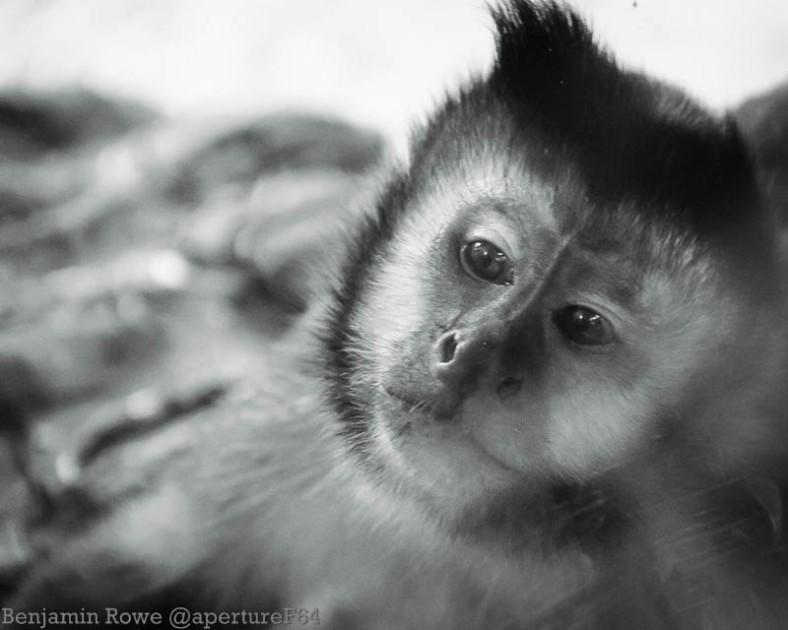 Monkey Captivity