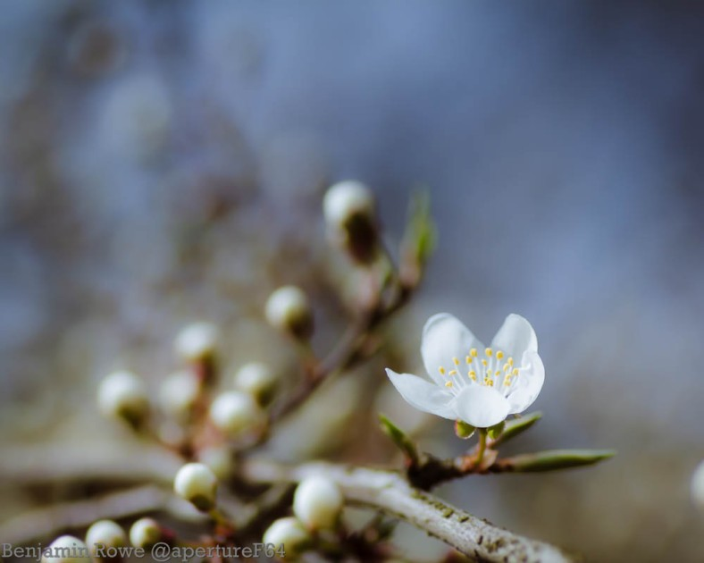 Single Blossom Flower