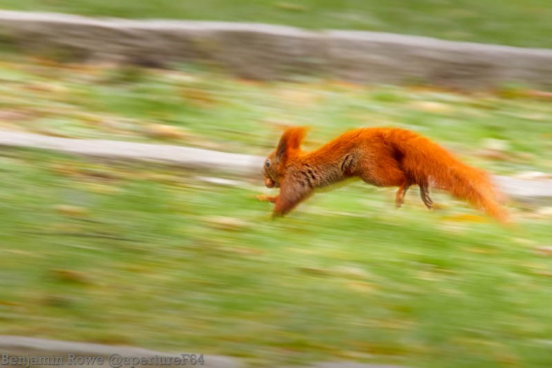 Squirrel Motion Blur