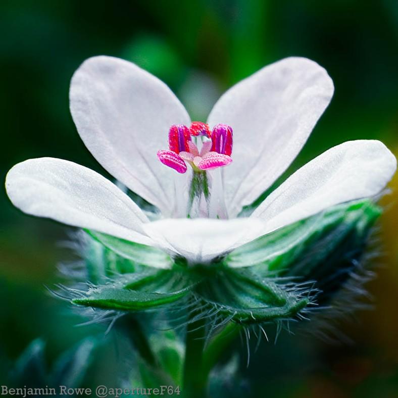 Wild Flower Macro-Edit5