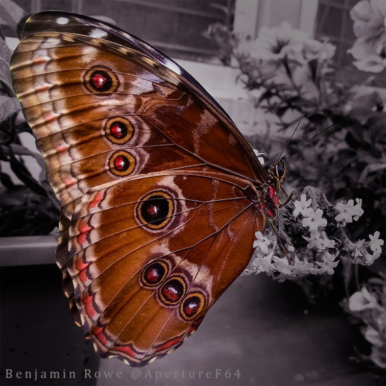 selective-color-butterfly