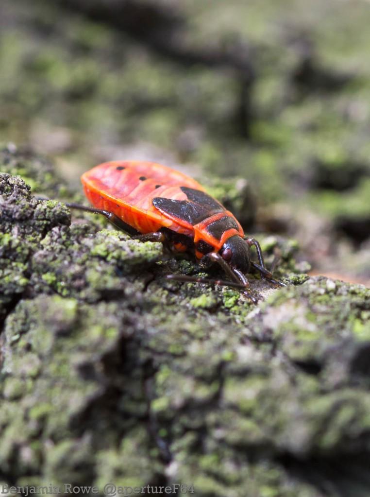 Firebug Sleeping