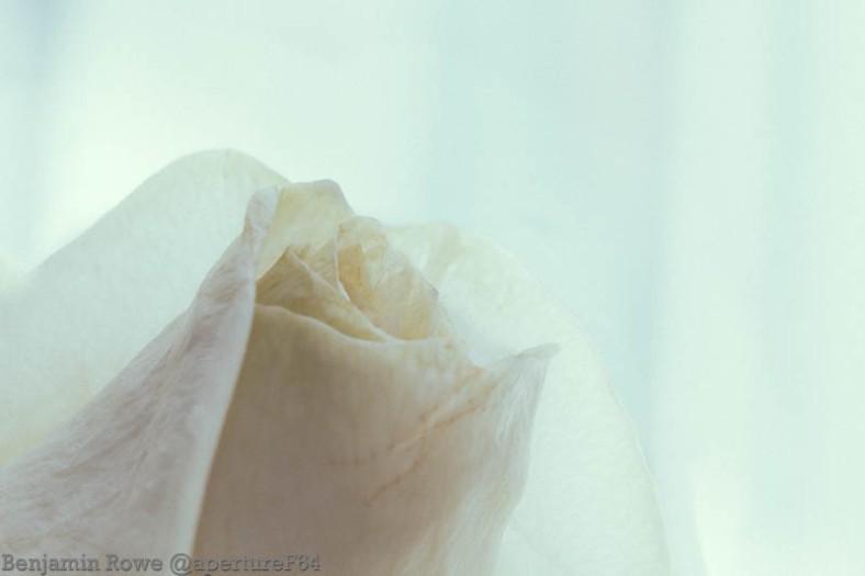 Dzień Edukacji Narodowej White Rose