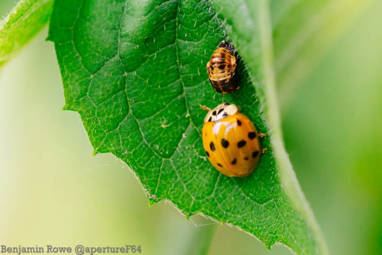 Ladybird waiting for a new friend