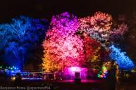 Light Move Festival 2015-3